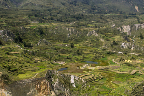Full day trip Colca Canyon
